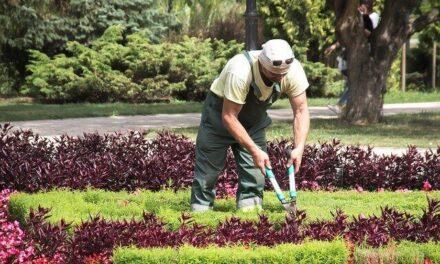 Comment devenir paysagiste